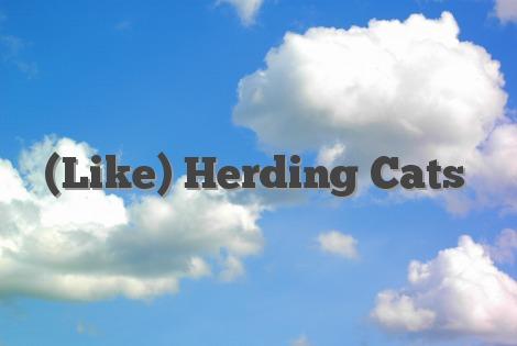 Like Herding Cats English Idioms Slang Dictionary