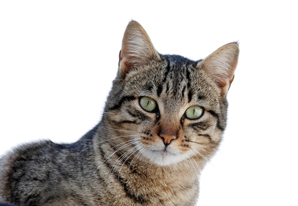 Cats Idioms: Top 10 Common English Idioms about CATS